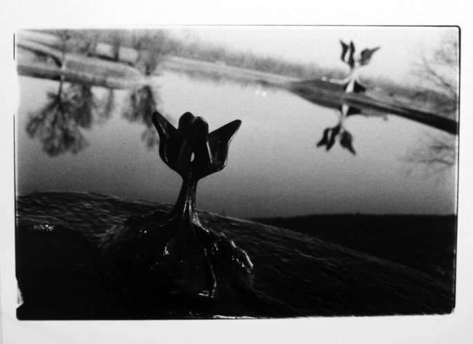 LA-FLEUR-DU-Bon_Jasenovac_Croatia_I_2014_opt