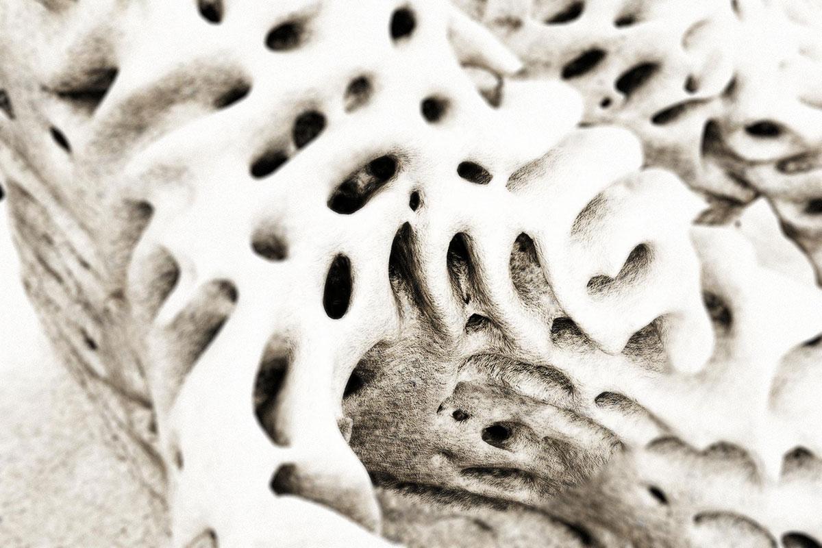 Alessandro-Zomparelli_Emergent-Reefs