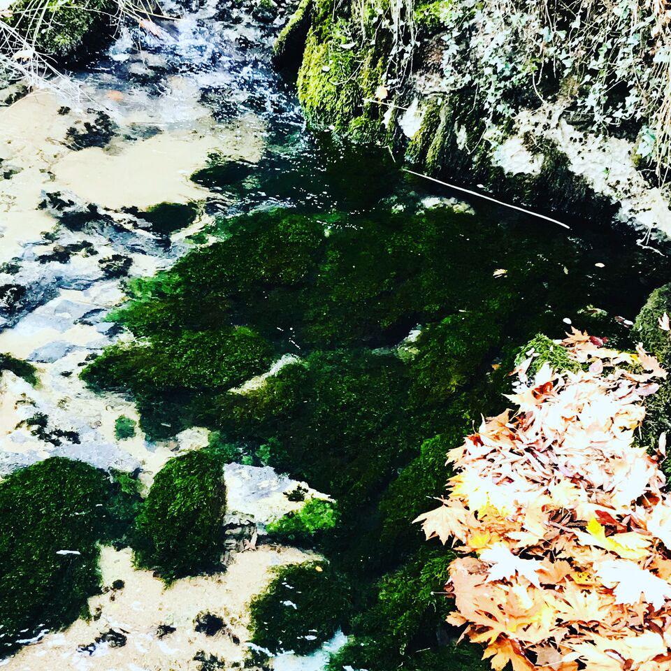 Despoina-Zavraka_Expanded-Natures