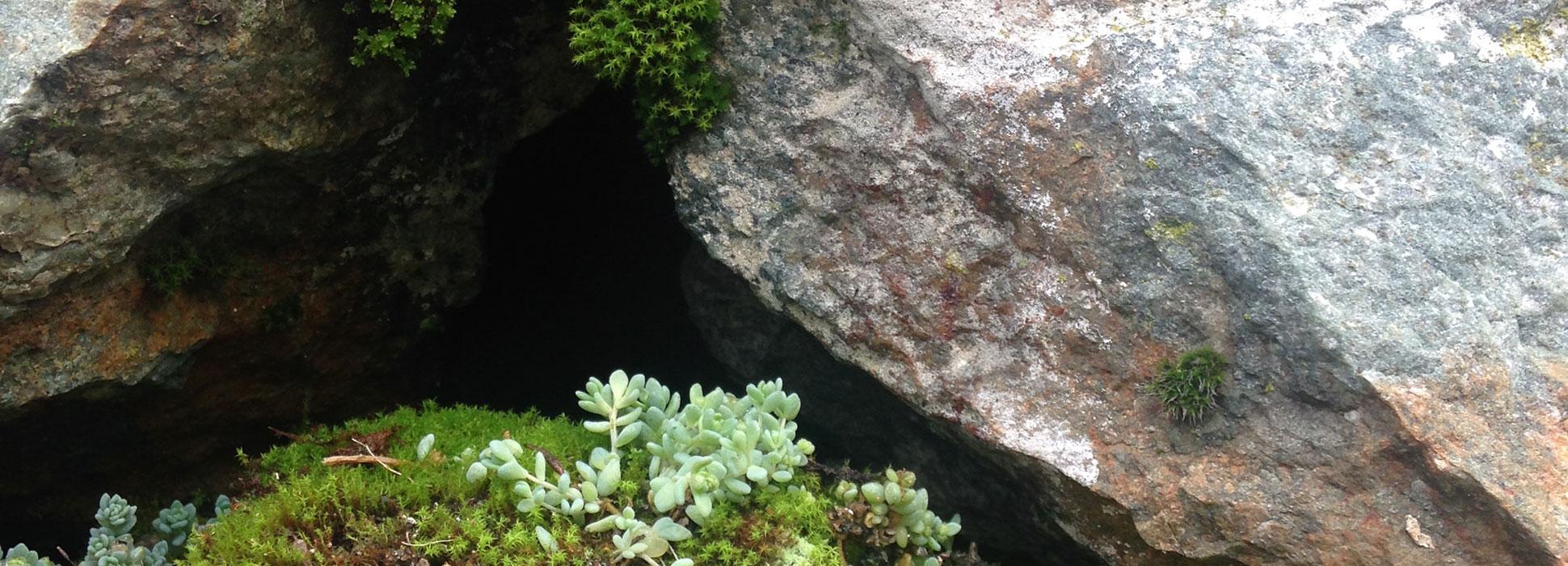 Despoina-Zavraka_Expanded-Natures_cover