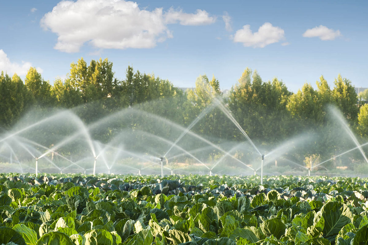 Irrigation-systems-in-a-green-vegetable-garden-By-Deyan-Georgiev_thumb